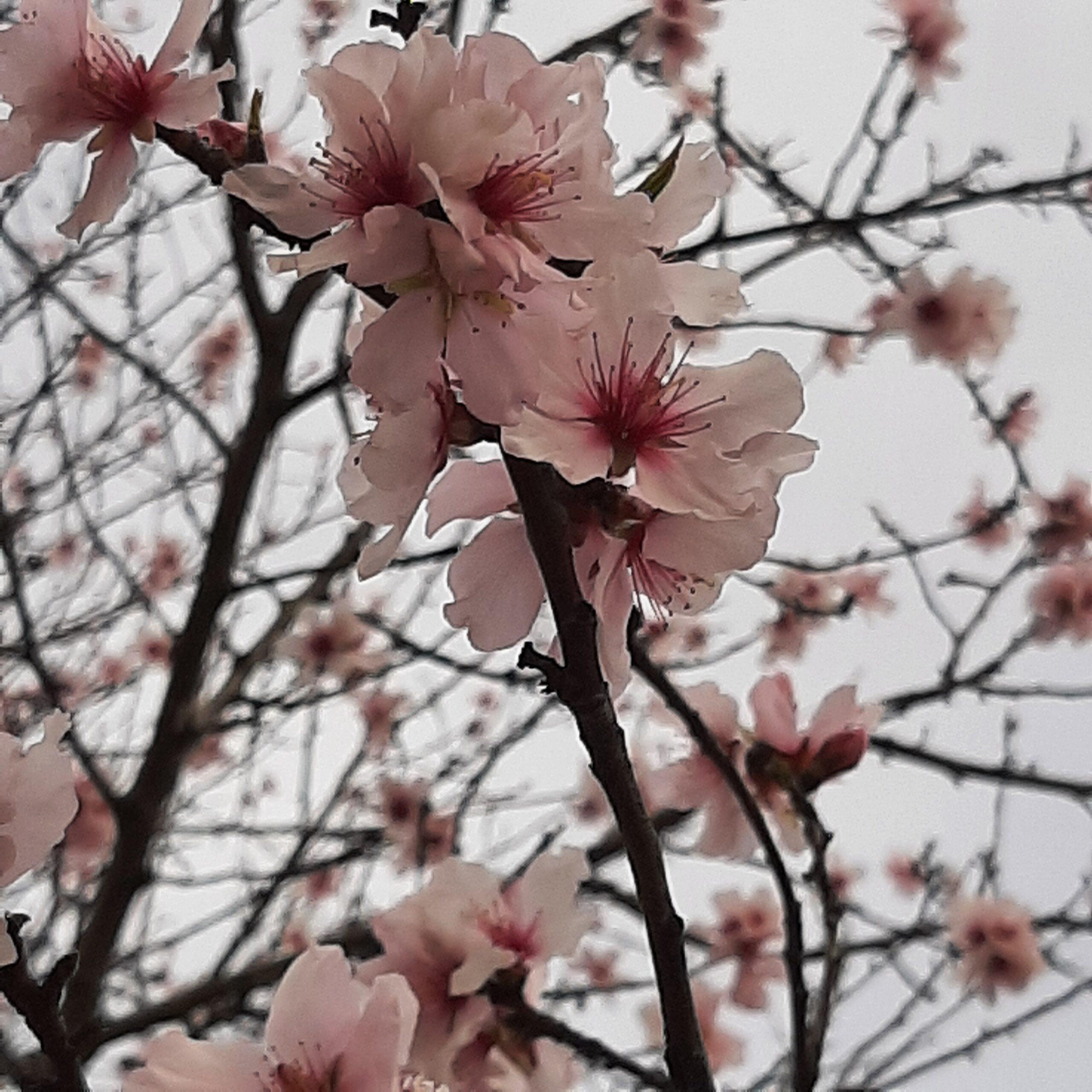 Flowers - LSL 2019